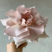 Poésie en fleur 🌸 @lapoetique_   .  #lesaimees #paris #Flower #fleur #rose #bloom #pink  #parismonamour #douceur #parisianvibe #fleurdujour #paris #floweroftheday